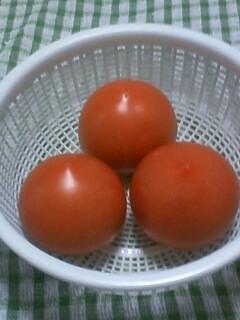 収穫物2012 プランター編 トマト