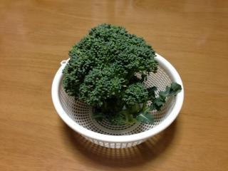 収穫物2013 プランター編 ブロッコリー