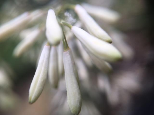 花マクロ・2016 [170] タケニグサ
