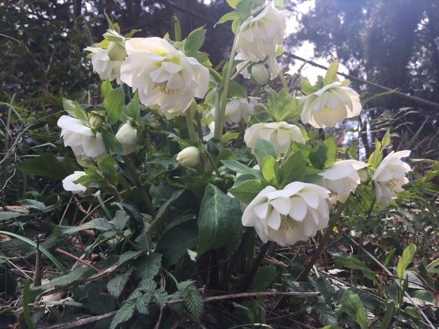 牧野植物園の花たち [8]
