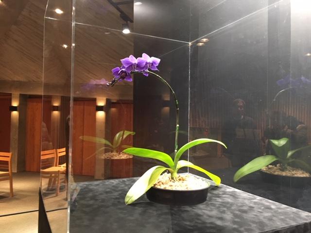 牧野植物園の花たち [10] コチョウラン